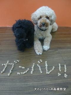 犬のようちえん高槻教室★20150726 (9)
