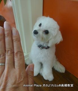 犬のようちえん高槻教室20150830 (1)