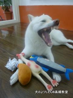 犬のようちえん高槻教室☆201509bd (5)